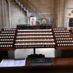 Massive organ